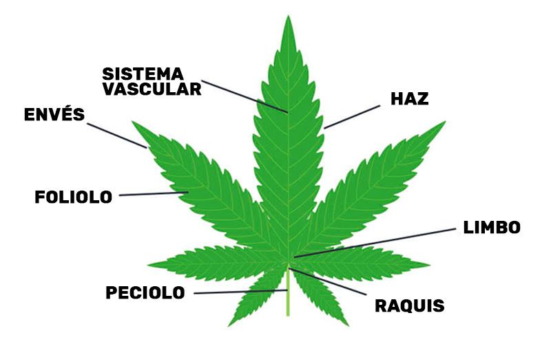parts-leaf-marijuana