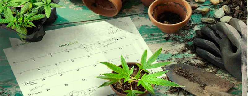 when-to-grow-marijuana-outdoors