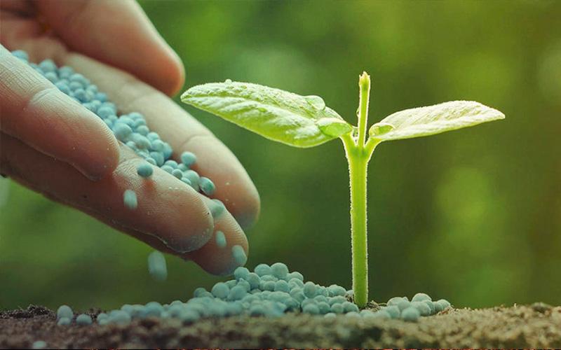 fertilizers-cannabis