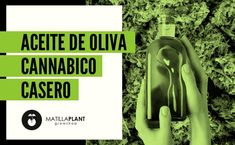 Cómo hacer aceite de oliva cannabico casero