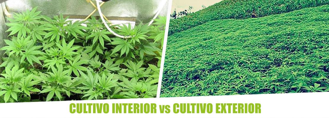 Cultivo Interior o cultivo exterior