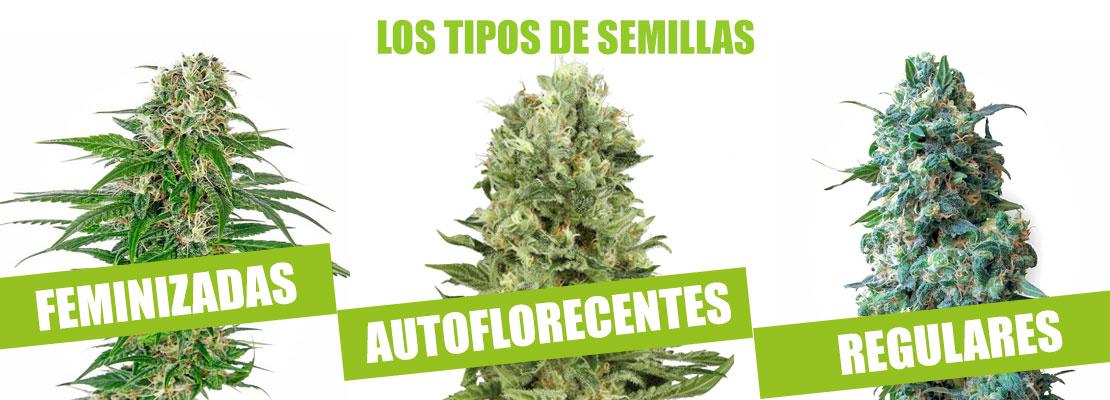 Tipos de semillas de marihuana